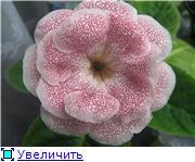 Семена глоксиний и стрептокарпусов почтой - Страница 7 D80461fcb436t