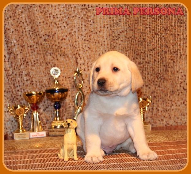 """Питомник """"Прима Персона"""". Мои собаки-моя жизнь! D27bcaf38db9"""