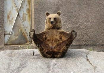 Ничто человеческое медведям не чуждо E21925ff9150