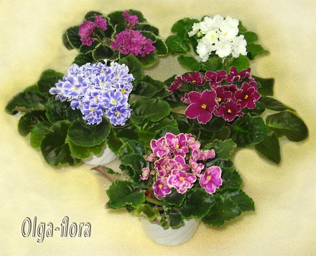 Цветение к Н. Г. (Olga-flora) - Страница 6 5d52b4ae4a5e