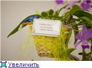 Выставка орхидей в Государственном биологическом музее им. К.А.Тимирязева 6e1e3e89d778t