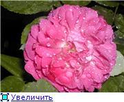 Specially for Karkela )))    Тестирование сербок и проч. - Страница 4 B95c8e4adef8t