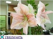 Наши цветочки C0216dc98665t