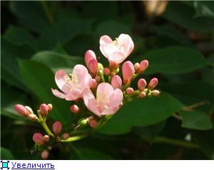 Орхидеи и прочая красота на о. Пхукет - Страница 2 A5bb566a5542t