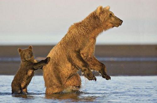 Ничто человеческое медведям не чуждо A9ff4dd8e0f5