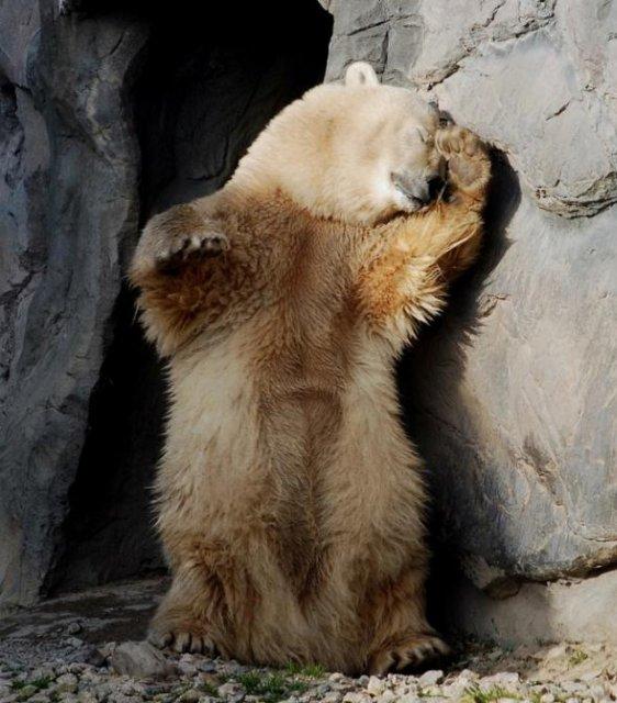 Ничто человеческое медведям не чуждо 3445baf3692d