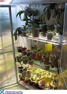 Размещение орхидей 1a2e2ef3a705t