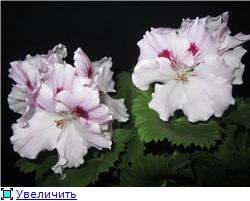 Красота без границ - Страница 6 7ad6db687c59t