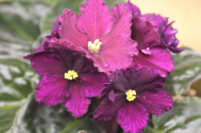 Растения от FILIGERa - Страница 12 Dbefd837a93d