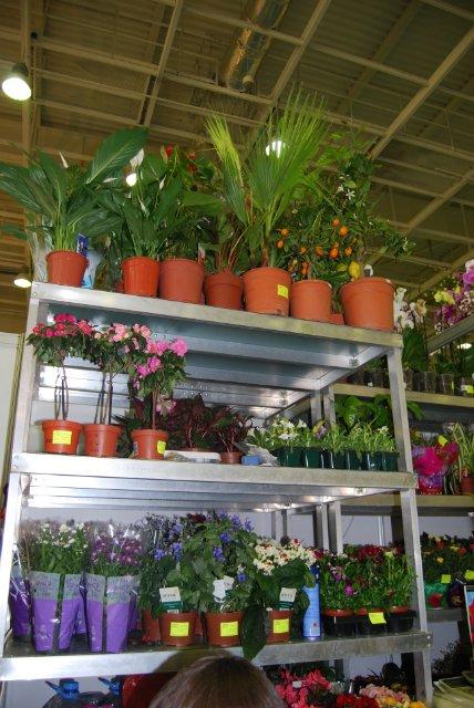 Международная выставка цветов AstanaFlorExpo - 2011 A95cb9f9a867