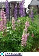 Лето в наших садах 35ce97082b13t