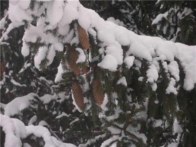 """""""Зимушка, зима...."""" 66aa1c916e13"""
