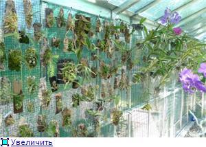 Размещение орхидей 2b0f252ddf51t