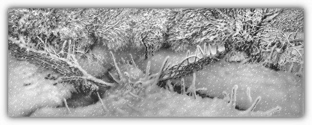 Снег, согревающий душу (Доленджашвили Г.) Fce69b684cc5
