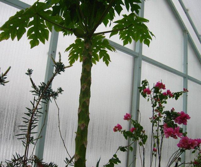 Растения из Нижегородской оранжереи 114d8ab40532
