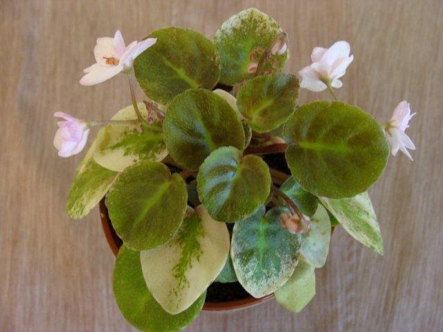 Мои цветочки - Страница 20 0ac0bbf89479