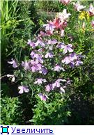 Лето в наших садах - Страница 7 005a44a6b9c0t