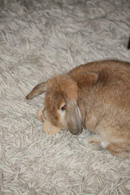 Кролики, декоративные и не очень) - Страница 2 598d8727b78e