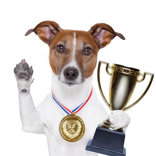 Интернет-зоомагазин Pet Gear - Страница 5 0c61d8d8428e