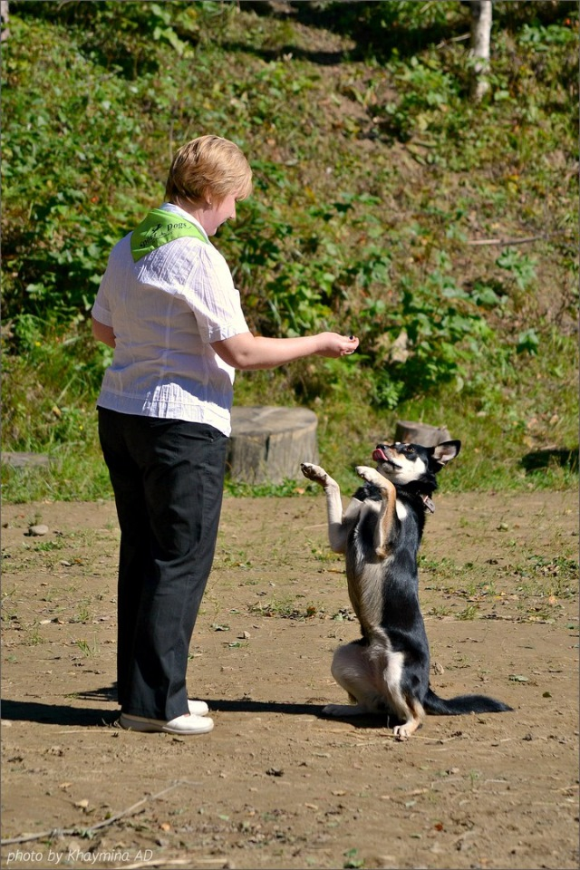 Танцы с собаками - Страница 3 08b6358f9e4b