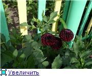 Лето в наших садах - Страница 7 E95f86eb4cb3t