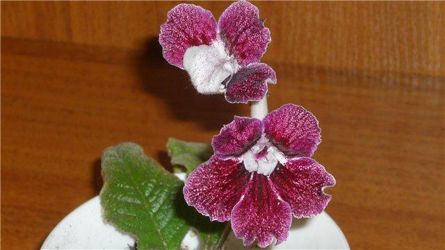 Мои любимые цветочки - Страница 2 775902de89c2