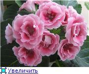 Семена глоксиний и стрептокарпусов почтой - Страница 2 91b36180c123t