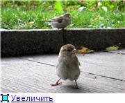 Птичий двор F521b20237e4t