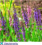 Наши домашние растения - Страница 2 B1dac09f78d5t