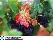Наши домашние растения - Страница 2 06aad9edd287t