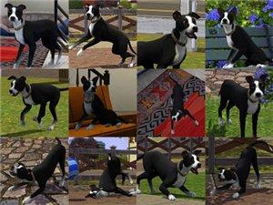 Собаки Aac58fa6a1af