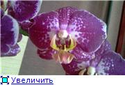 Sevgilim ( мои любимые) 3e029ce6ecfet