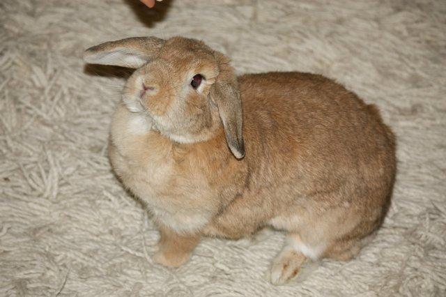 Кролики, декоративные и не очень) - Страница 2 1e199d161aec