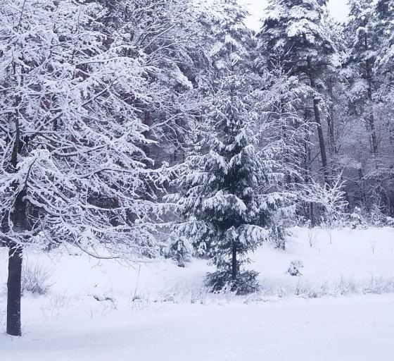 Зимняя сказка на наших фотографиях - Страница 14 0509f5b8e299