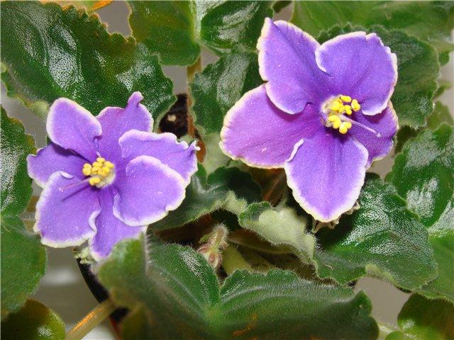 Весеннее  цветение (Хваст от Веры) - Страница 7 2c047ab385f8
