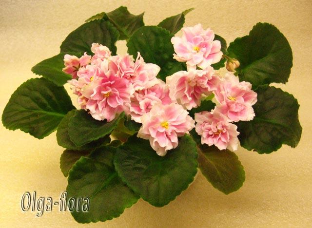 Розовый Жемчуг   (К. Л. Морев) F81a331026f2