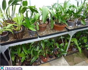 Размещение орхидей Cfa0d51bfadet
