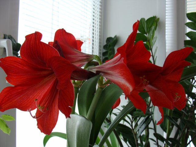 Мои цветочки - Страница 7 69e01911ee30