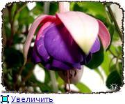 ФУКСИИ В ХАБАРОВСКЕ  6baf211e8ddct