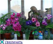 Геснеривые (фиалки, глоксинии, стрептокарпусы, и.т.д.)  - Страница 2 97388b6fb2d6t