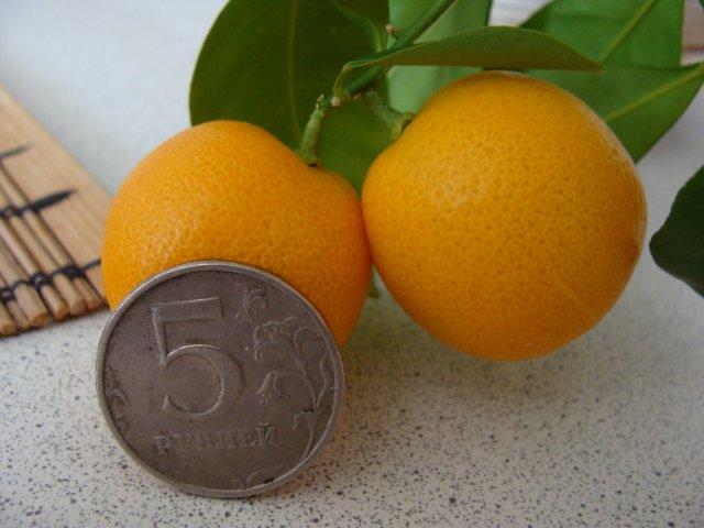 Плодовые - Страница 4 A5d37d982d8f