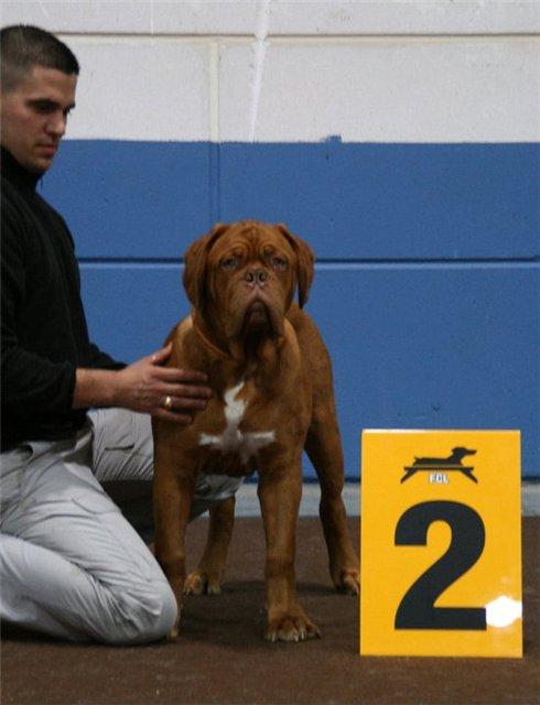 international dog show luxembourg  A0669e9d44f0