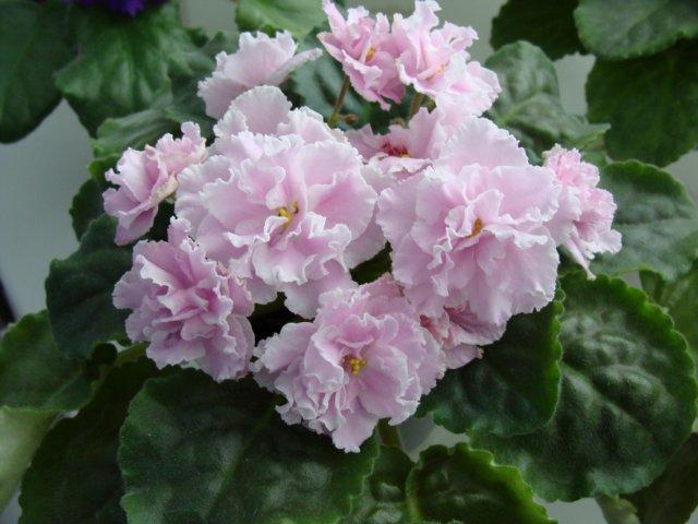 Мои цветочки - Страница 19 12a760010ade