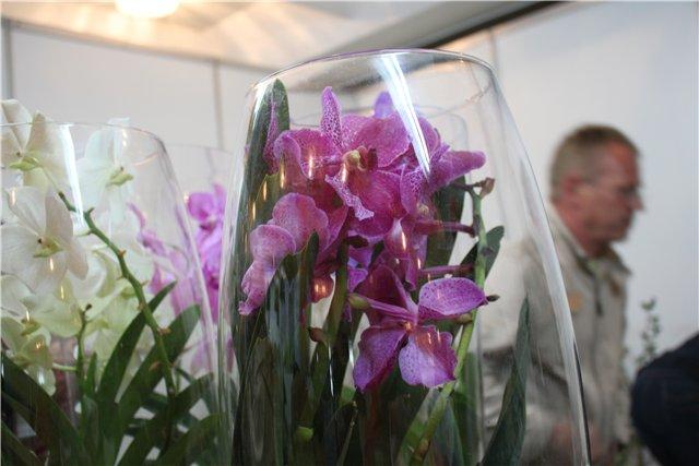 Выставка ландшафт и приусадебное хозяйство 2011, Алматы. - Страница 2 256ae8d68194