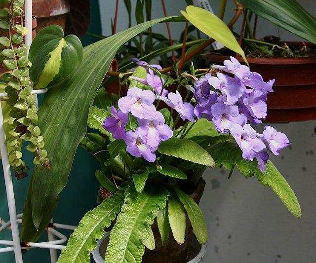 Экскурсия по Ботаническому Саду Bff16cee673f