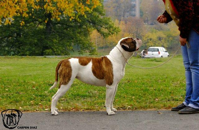 Собаки питомника Carpen Diaz - Страница 2 8812b3c36bec