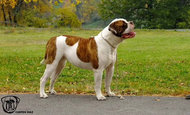 Собаки питомника Carpen Diaz - Страница 2 55d0aa0d8a2d