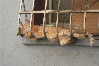 Сама по себе гулёна (о кошках) - Страница 2 E2a737df8d01