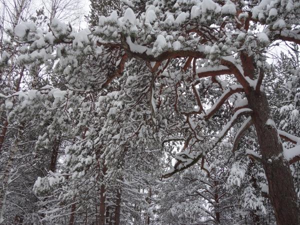 Зимняя сказка на наших фотографиях - Страница 14 89169942af75