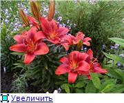 Наши цветочки F8ab902fe923t